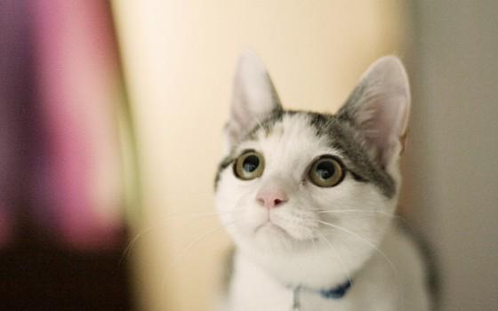 「そんな目で見つめないで!」猫の気持ち理解してますか?