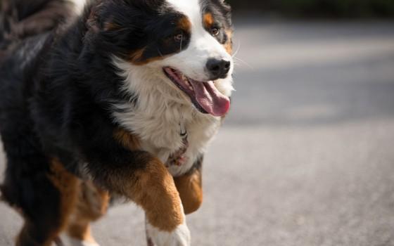 """犬にとって一番の楽しみ""""お散歩"""""""