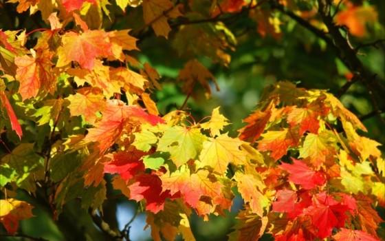 幻想的な紅葉の風景が広がる霧島の絶景スポット