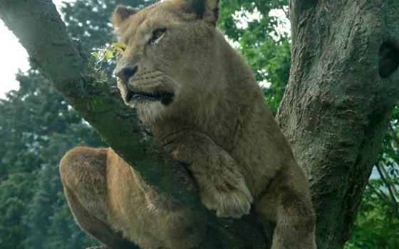 無料の動物園