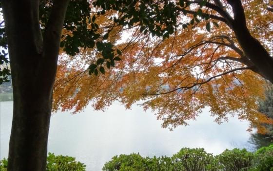 紅葉が綺麗な鹿児島県の大隅湖