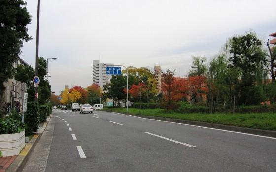 見ごたえのある緑地帯がある道路です