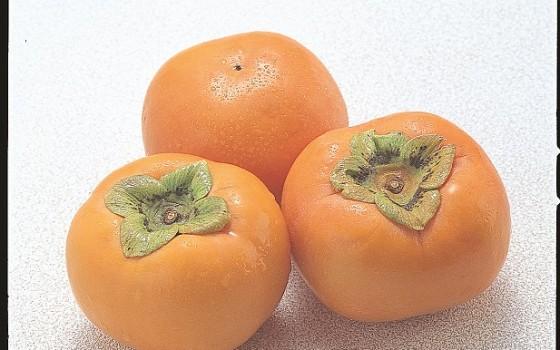 柿はどうでしょう?~鳥取特産品情報編・5品目~