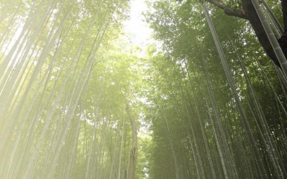 伊豆市にある竹林の魅力