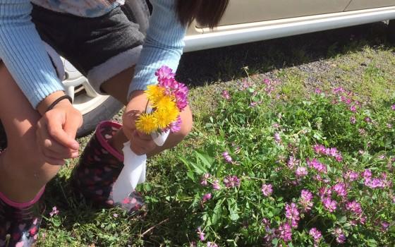植えられる野花