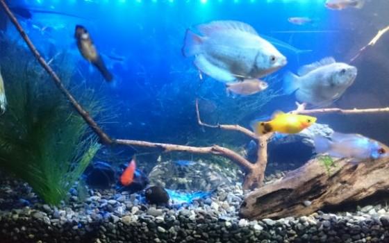熱帯魚。。。