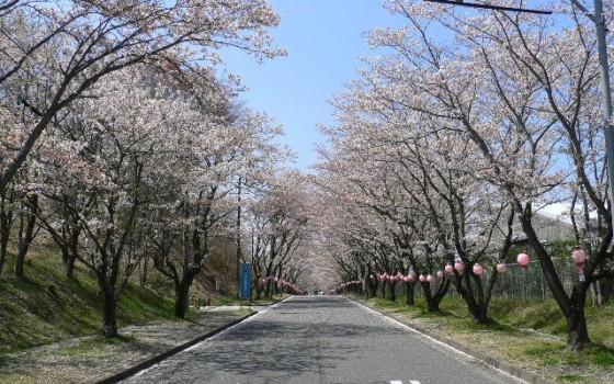 4月は名張桜まつりに来てください!